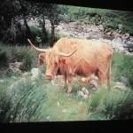 Skotsko 11.1.2018 L. Turek 019